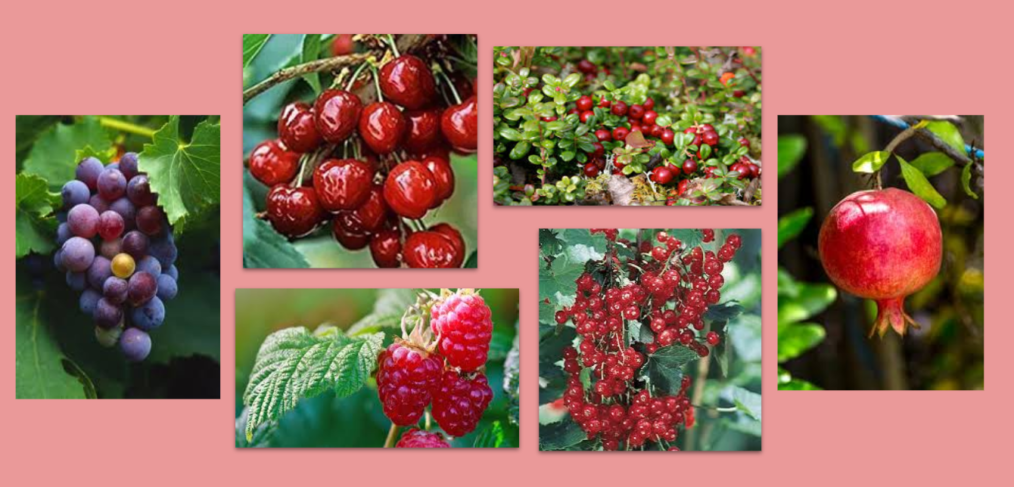 antioxidant berries for inflammation