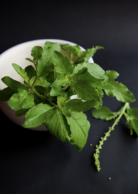 Thai basil, also known as holy basil or tulsi